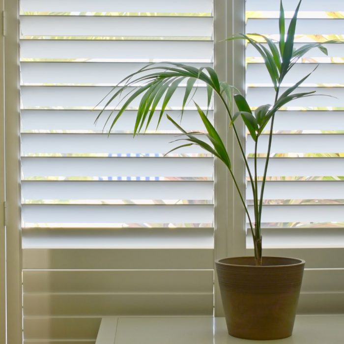 Indoor Basswood Plantation Shutters in Camden