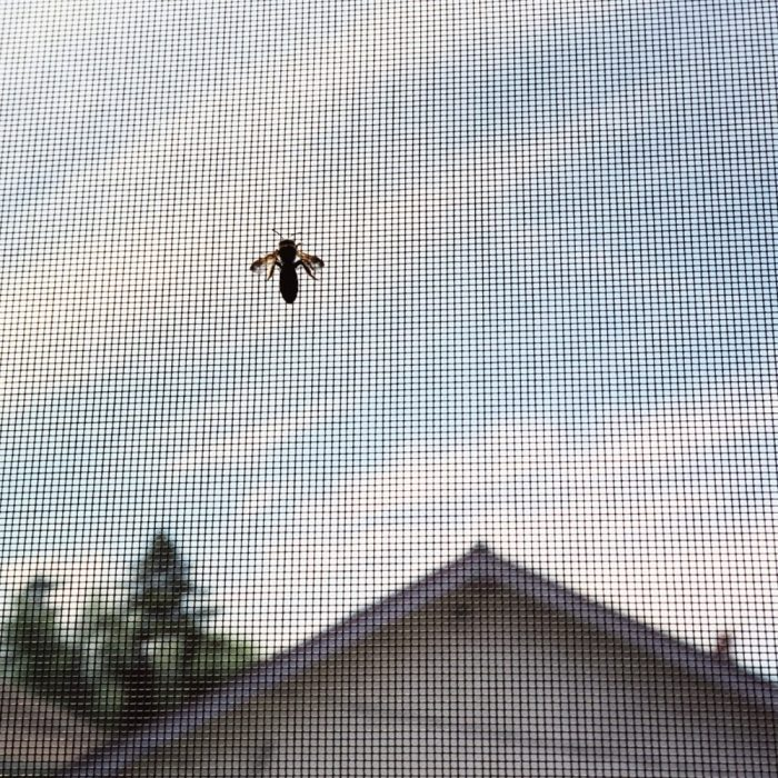 Indoor Fly Screens in Macarthur Region