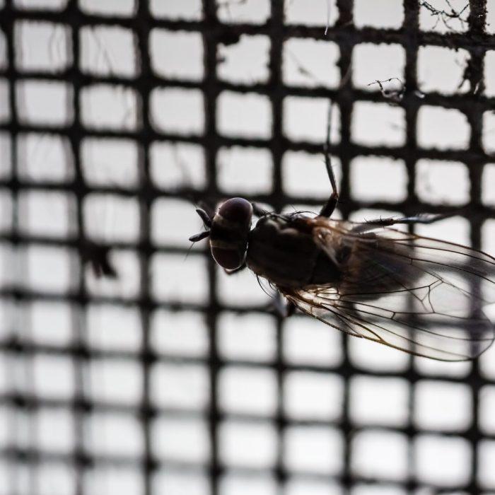 Indoor Fly Screens in Campbelltown